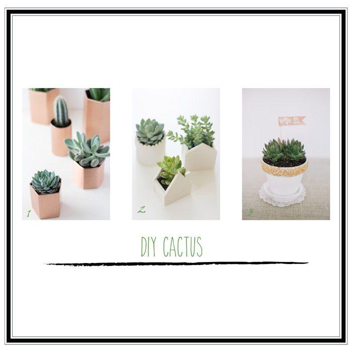 diy cactus selección 3