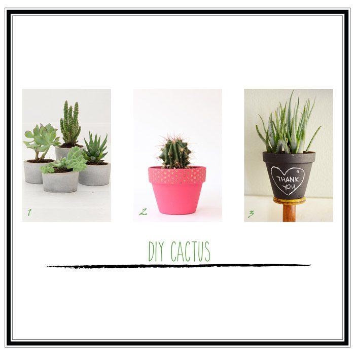 diy cactus selección 4