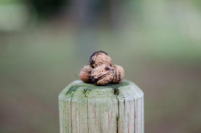 nueces de otoño