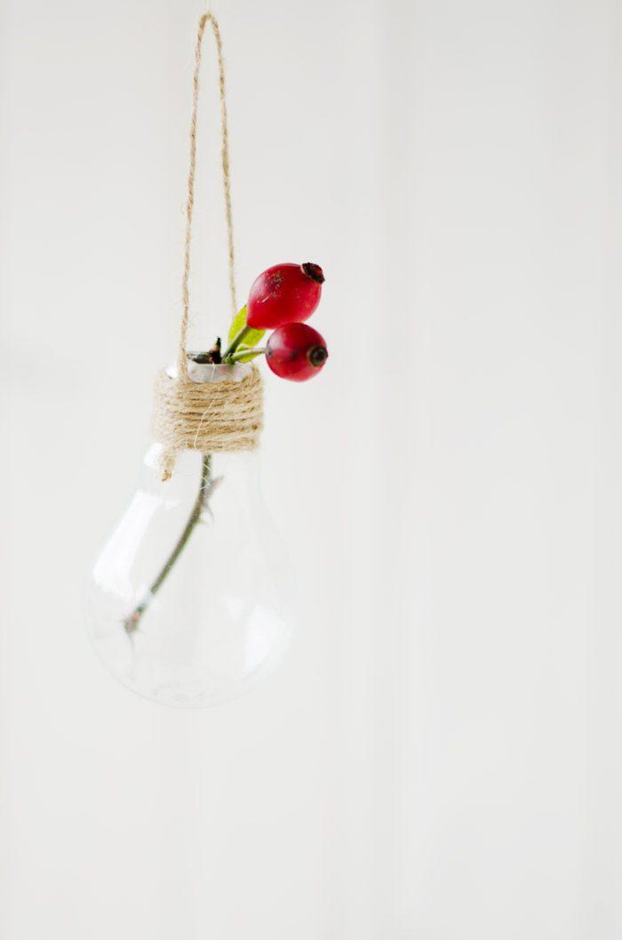 rosas silvestres bombilla